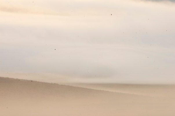 dust11