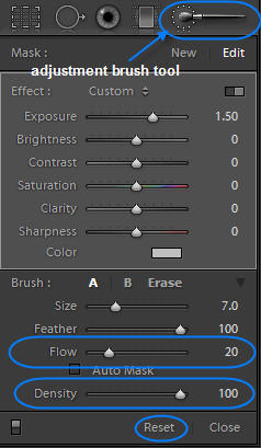 Adjustment Brush Flow and Density